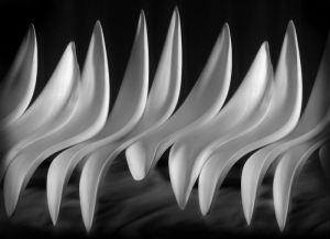 Unfolding #10 (plumeria)